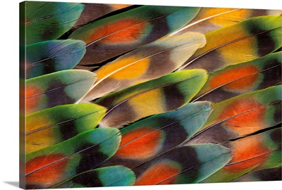 Tail Feather Design And Pattern Of Many Varities Of Lovebirds