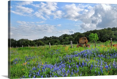 Texas Wildflowers In Burnet, Texas