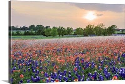 Texas, Your Texas