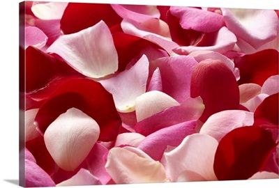 The petal which was spread