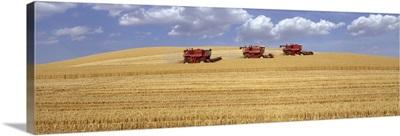Three combines harvesting wheat field, summer