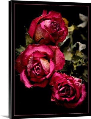 Three dead roses.