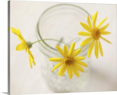 Three yellow daisies in glass jar.