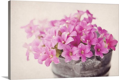 Tiny pink flowers in small metal bucket with texture.