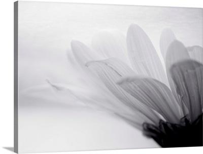 Translucent flower.