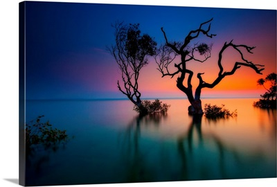 Trees in bay at sunset.