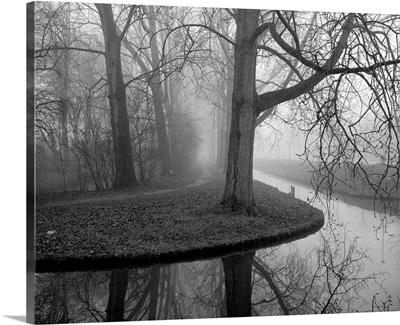 Trees in fog.