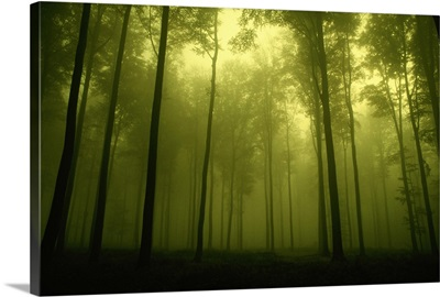 Trees in fog, low angle view