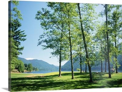 Trees, Seattle, Washington State.