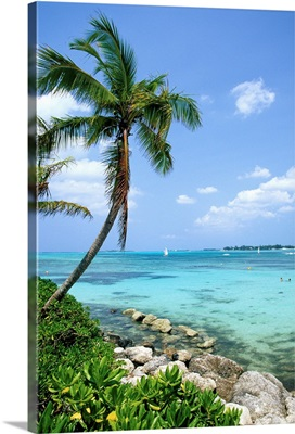 Tropical beach with palm trees and clear blue water, Bahamas