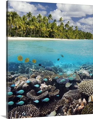 Tropical Lagoon in South Ari Atoll in the Maldives in the Indian Ocean