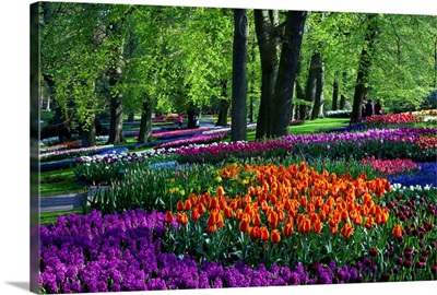 Tulips And Hyacinth In Keukenhof Gardens