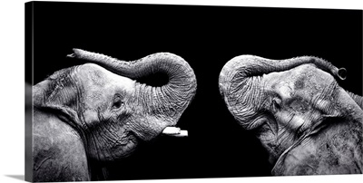 Two elephants stand face to face with trunks raised.