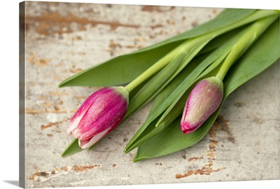 Two pink tulip buds lying on aged wood.