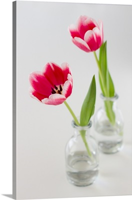 Two pink tulips in clear glass bottles, on white background.