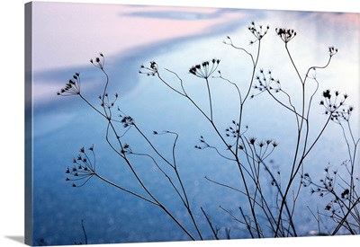 Umbelliferae silhouettes front of frozen lake in winter.
