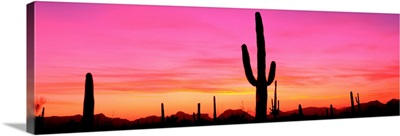 USA, Arizona, Organ Pipe National Monument, sunset