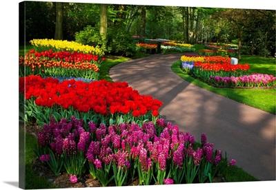 Walkway Among Tulips And Hyacinth In Keukenhof Gardens