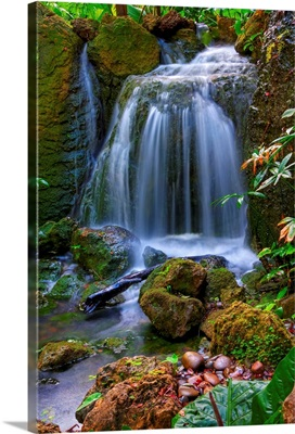 Waterfall in Tropical Rainforest of Fairchild Tropical Gardens.