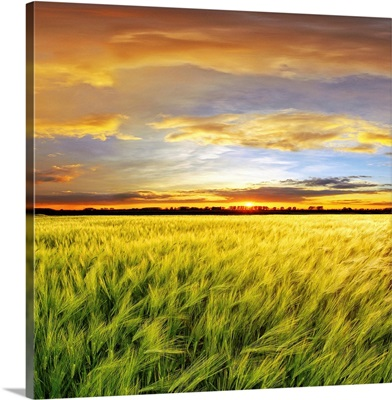 Wheat field with sunset, Spain