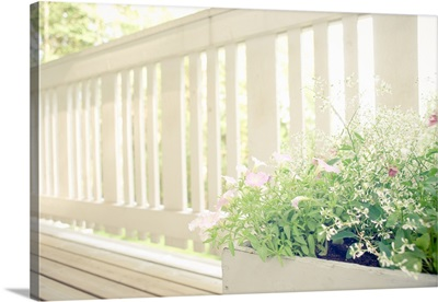 White balcony fence on  sunny summers day with flowers in foreground.