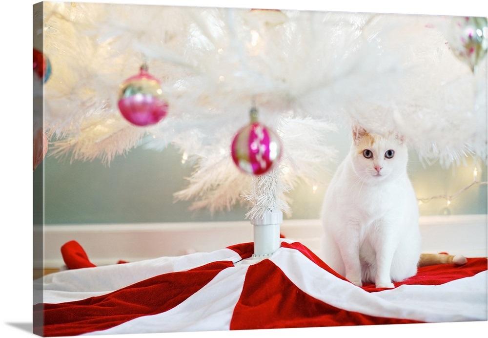White Cat Standing Under White Christmas Tree