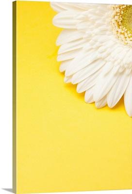 White Gerbera daisy with yellow copyspace.