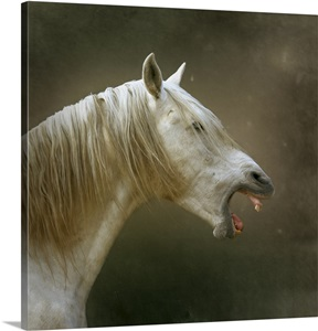 White Horse With Open Mouth Digitally Enhanced Background