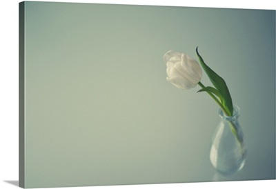 White tulip in small transparent glass vase on transparent glass table