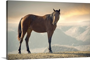 Wild Brown Horse Standing At Canyon During Sunset Wall