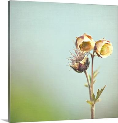 Wild flower against blurred background.