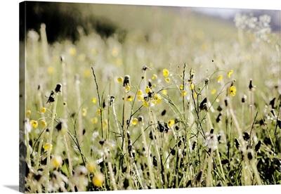Wild flower field at springtime, Germany.