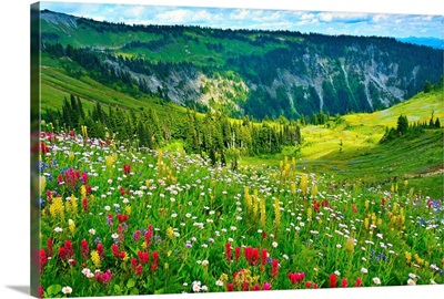 Wild flowers blooming on top of Mount Rainier during the summer.