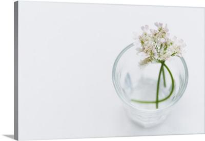Wild flowers in water glass.