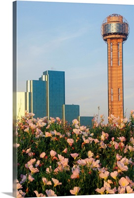 Wildflowers and Dallas skyline at sunset with Reunion Tower, Texas