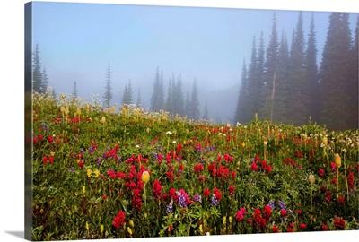 Wildflowers in a field, Washington