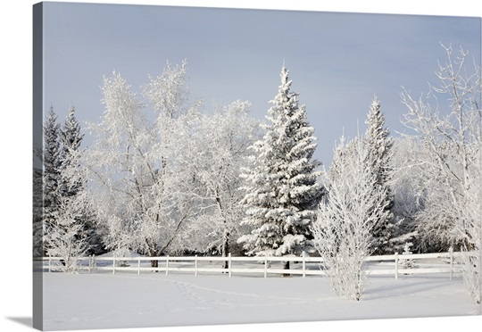 Winter Wall Art winter landscape, calgary, alberta, canada wall art, canvas prints