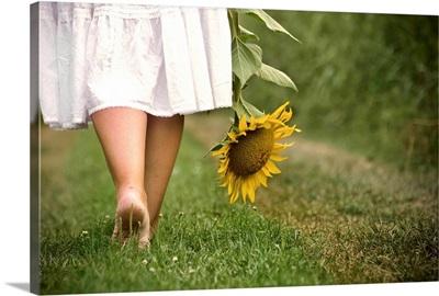 Woman bare feet walking on grass holding sunflower.