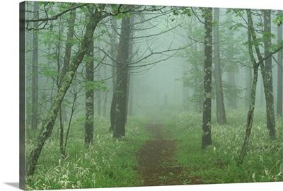 Woods in mist
