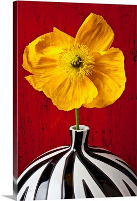 Yellow Iceland Poppy in striped vase against red wooden wall