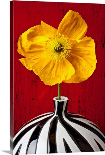 Yellow Iceland Poppy in striped vase against red wooden wall Wall ...