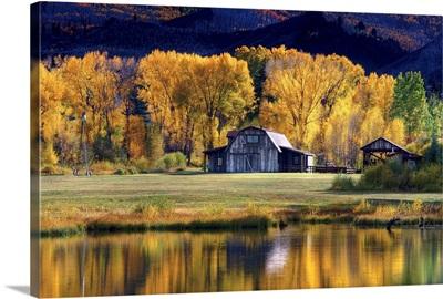 Aspen Trees with Barn