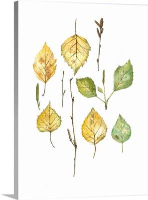 Birch Parts