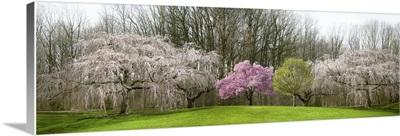 Blooming Spring Display