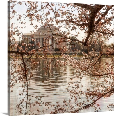 Cherry Blossoms VIII
