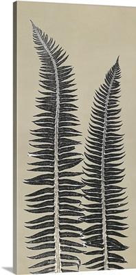 Cocoa Ferns
