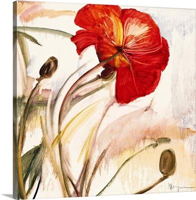 Crimson Poppy I