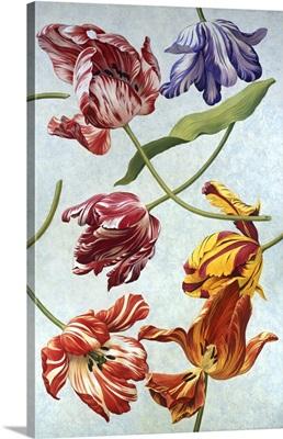 Floral Tulips III