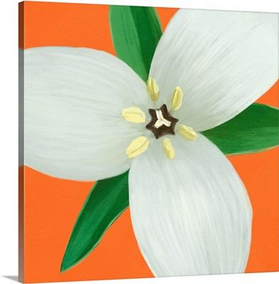 Flower Art VII