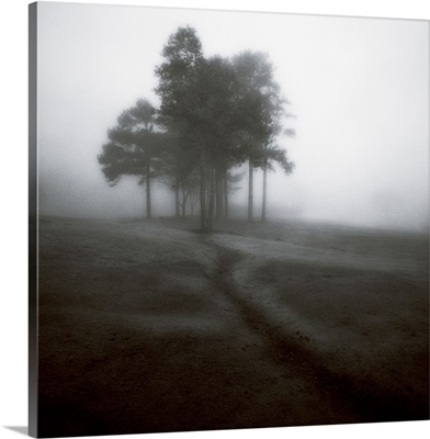 Fog Tree Study 1